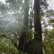 ヤクスギの森をお散歩