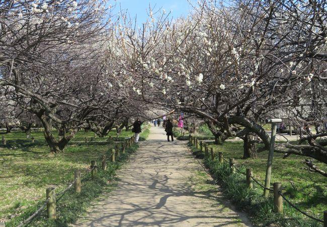 越谷市が整備した梅林公園