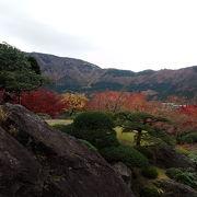 箱根で一番の紅葉名所と聞いて訪れましたが…