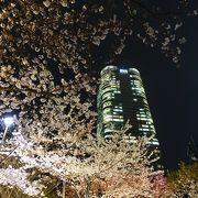桜越しの光景が美しい
