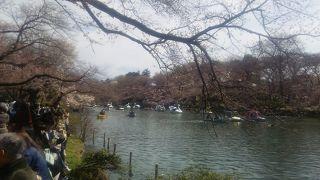 桜の季節は大混雑