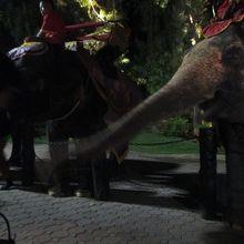 象にも会えます