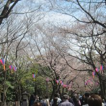 飛鳥山公園は江戸時代から桜の名所