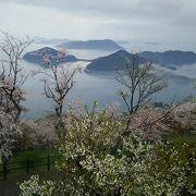 海と桜の絶景ポイント