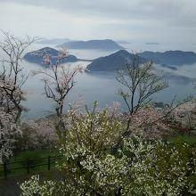 満開の桜と雲海の瀬戸内