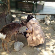 小鹿にウサギに子羊に子ヤギ。あれっ、親はどこにいる?