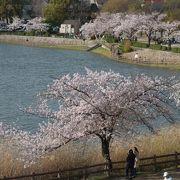 新海池は人工池です。ため池として人工的に作った池です。桜がきれいです。