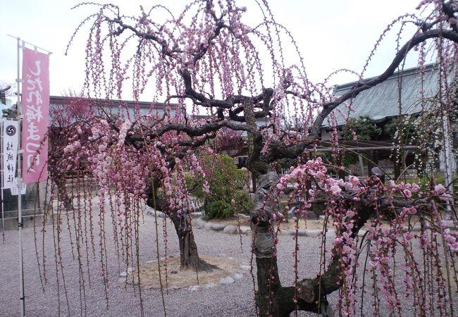結城 神社
