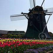 2017年のチューリップまつりは4月17日まで開催中 最高に綺麗でした