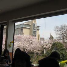 駅に敷設されたアトレ内のレストランから見た桜
