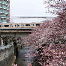 満開の桜と中央線