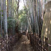 竹林の中の小径