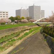 新横浜駅の近くでお花見が楽しめます