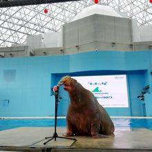 水族館のショー
