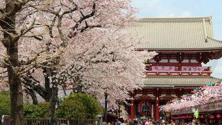 桜の咲く時期も良い
