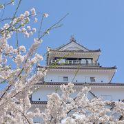 惚れ惚れするほど見事な桜です