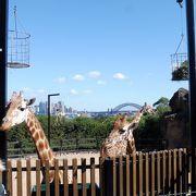 2017年度は動物園100歳記念で入園料1ドル・・・