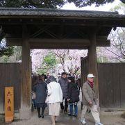 門越しの桜は絵になる