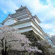 お城(23万石!)で 桜が取り囲んでいます