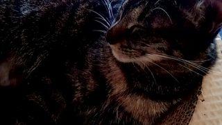 キャットカフェ ミーシス 猫カフェ