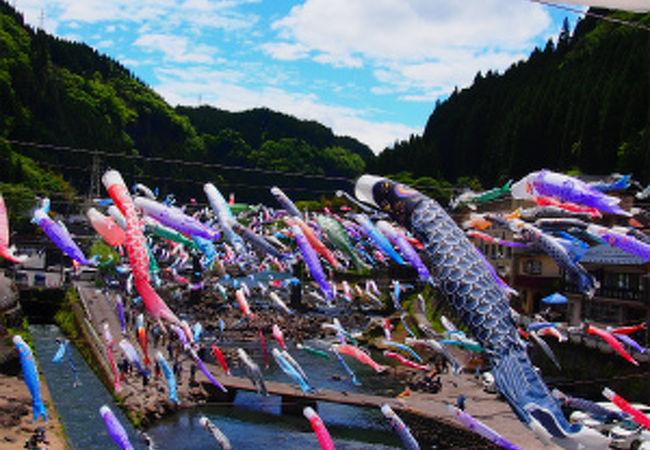 青空に泳ぐ約3,500匹のこいのぼり