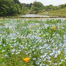 県立北総花の丘公園