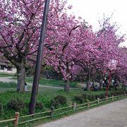 ここの桜が最高!