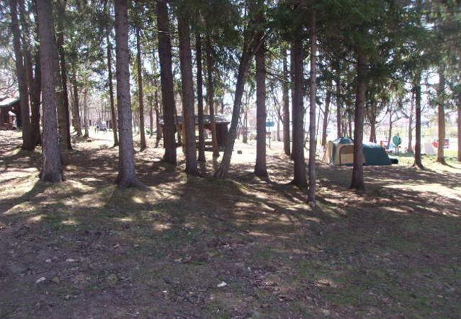 とうま スポーツランド キャンプ場
