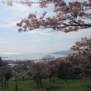 風光明媚な小樽の桜の名所