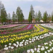 綺麗な花とお洒落な街並み