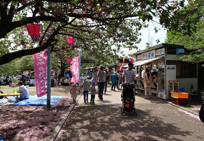 八重桜とツツジがきれい