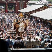 見応えの有る三社祭