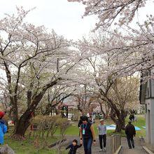真人公園桜まつり