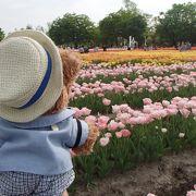 この時期に富山に訪れたら行った方が良いですよ!