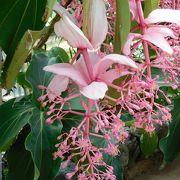 4月29日にOPENした植物館に行きました。世界各地のシンボルツリーとバラ、サボテンの花、蘭がきれいでした
