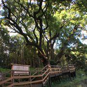 上谷の大クスや越生梅林の最寄り駅です。