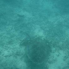 海の底にウミガメ