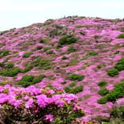 平治岳のミヤマキリシマがきれいでした。