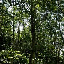 林が広がる