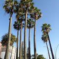ヤシのそよぐ広場は南国的な景観