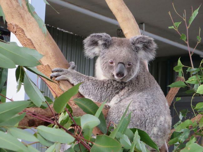ワイルドライフ シドニー動物園