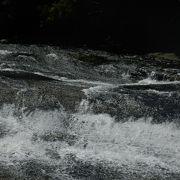 浦内川上流の高低差が少ない滝