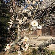 梅を見に行きましたが竹も綺麗