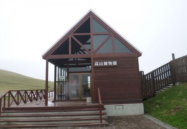 礼文町高山植物園