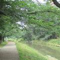 写真:霞川の桜堤(豊高橋〜新霞橋〜大和橋)