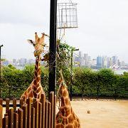 フェリーとケーブルカーで向かう動物園。
