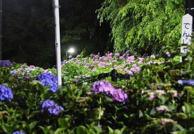 箱根登山鉄道 夜のあじさい号