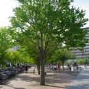 アリオ川口前公園広場