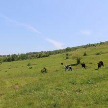 根子岳登山道から見えた牧場