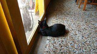猫門 カフェ モーメント